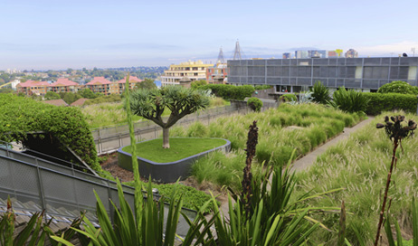 Some handy tips for Maintaining a Green, vegetative roof top.