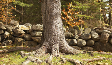 5 quick steps to dealing with invasive tree roots from Lowes